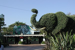 Travelers Rank San Diego Zoo Among World's Best