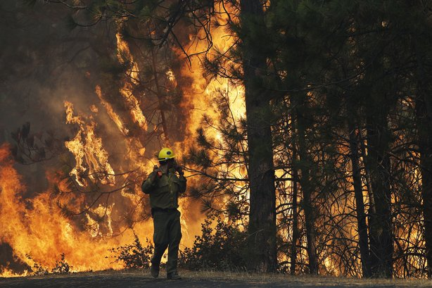 Firefighter A.J. Tevis watches the flames of the Rim fire near Yosemite Natio...