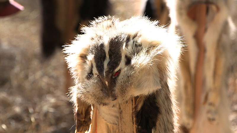 A badger fur cap for sale at the Laguna Mountain Rendezvous 20 mile... ()