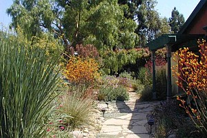 Tips For Winter Gardening In California