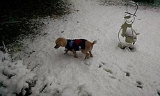 A dog is shown in the snow in Temecula on Dec. 31, 2014.  (49489)
