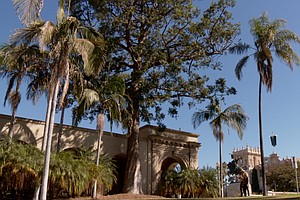 'A Growing Passion' Begins Third Season With Focus On Balboa Park