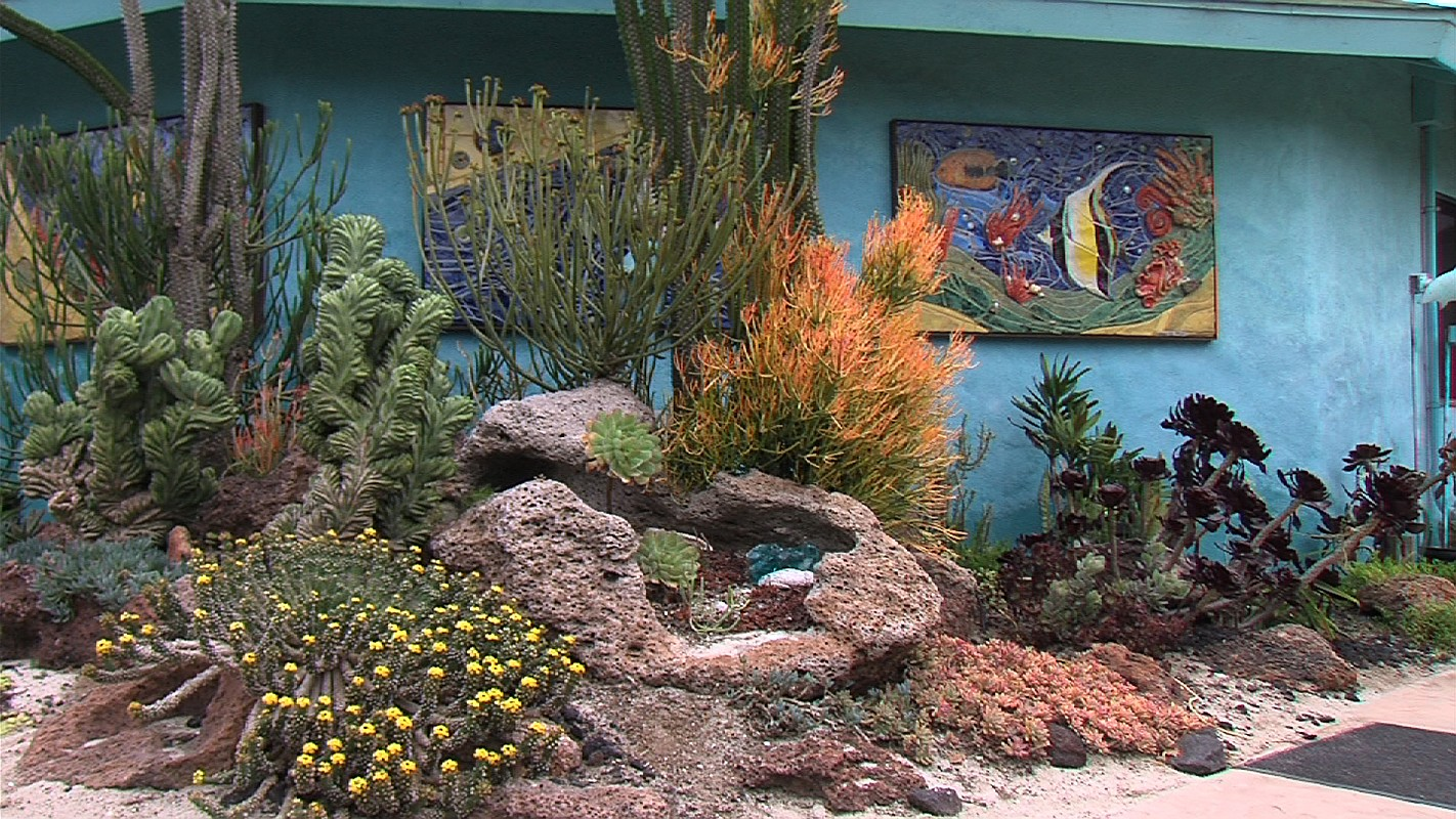 The Undersea Succulent Garden At The San Diego Botanic Garden In Encinitas,  June 12,