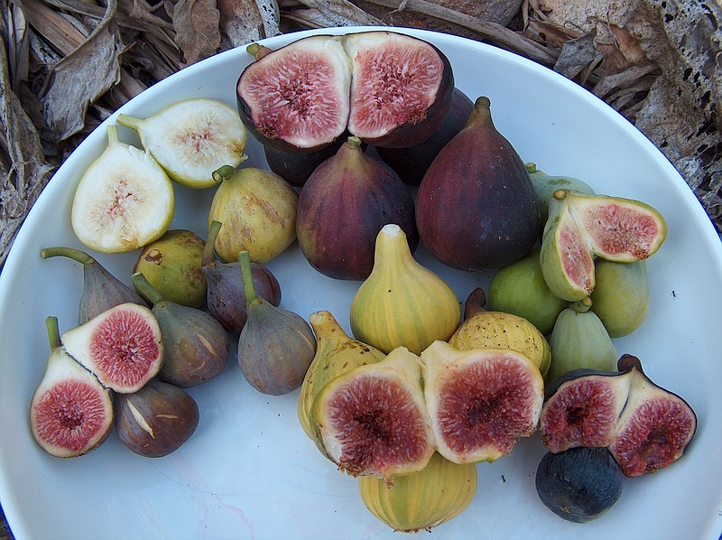 An assortment of figs, which ripe late summer to fall, sit on a dish in this ...