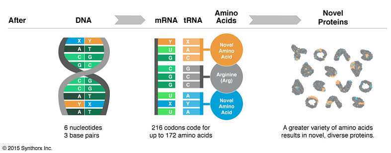 Synthorx details how it creates new proteins in this graphic, Aug. 19, 2015.