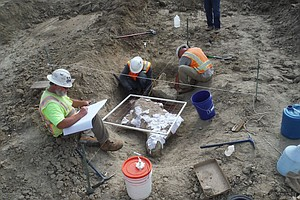 Ice Age Fossils Unearthed At Carlsbad Construction Site