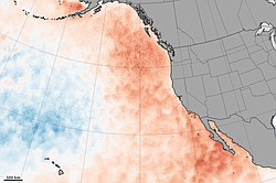 This map of the West Coast shows sea surface temperature anomalies in the Pacific Ocean in March 2015. They show how much above (red) or below (blue) water temperatures were compared to the long-term average from 2003 to 2012.