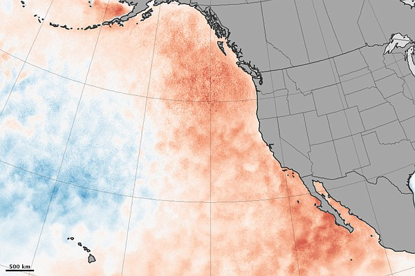 This map of the West Coast shows sea surface temperature anomalies in the Pac...