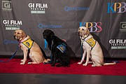 Service dogs pose on the red carpet.