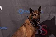 Jagger, also known as Max, takes a picture on the GI Film Festival red carpet.