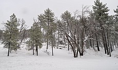 Snow is shown on Mount Laguna, Jan. 7, 2016.