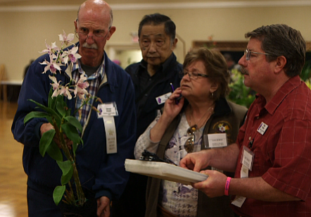 Judges at San Diego's spring orchid show take a hard look...