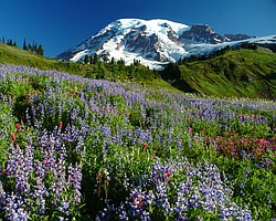 Mount Rainier National Park, Washington.
