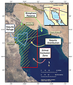 This map of the Gulf of California shows where the endangered vaquita porpois...