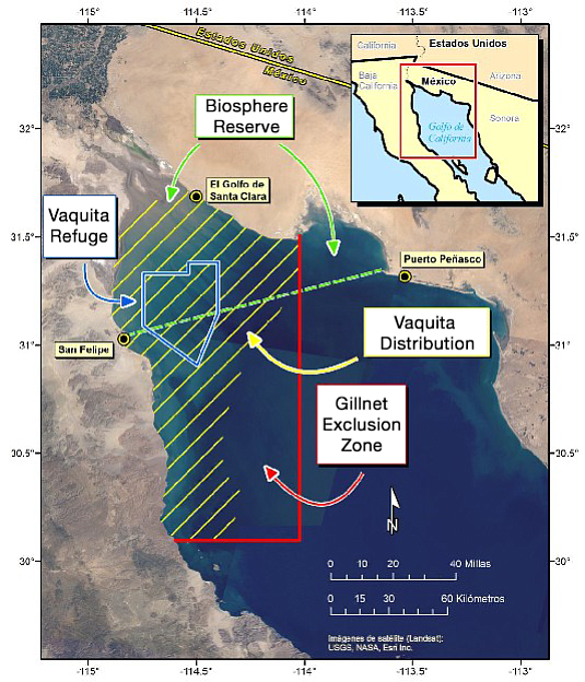 This map of the Gulf of California shows where the endang...
