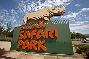 Photo for Rabid Bat Potentially Infects Safari Park Visitor; County Seeks ID Of Visitor