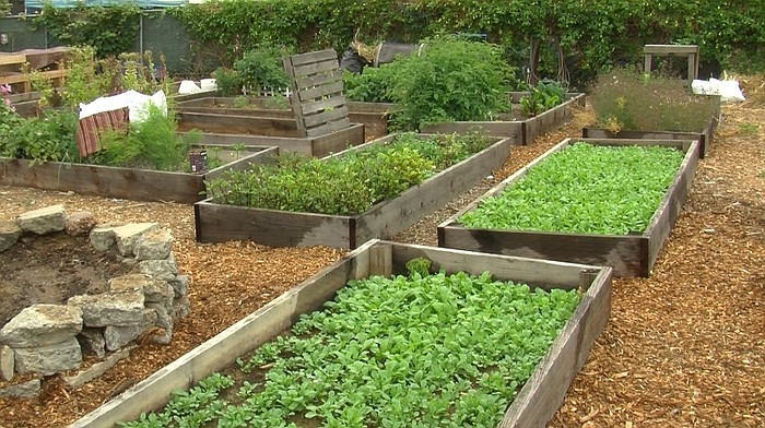 the mt hope community garden of 40 beds of fruits and vegetables will be one