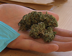 An eighth of an ounce of marijuana is held in the palm of a hand, Nov. 6, 2015.