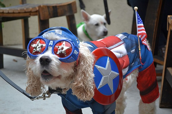 A photo of Puptain America from a PAWmicon costume contest.
