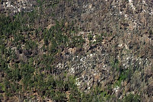 Considering California's Tree Policies Amid Mass Die-Off