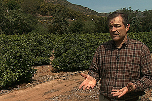 Labor Shortage And Other Risks Confront San Diego Farmers