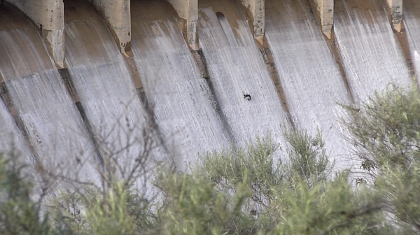 A fish spills through the floodgates on the Lower Otay Re...