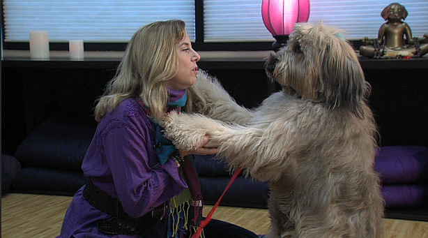 San Diego Class Shows Dogs Are Naturals At Meditation - KPBS 1