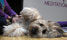 Madeline gets a massage during a Wellbeing for Dogs + Their Humans class, Feb...