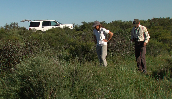 Biologists Susan Wynn and John Martin inspect coastal sage scrub on the San D...