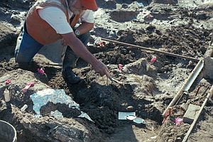 Mastodon Bones Found Near San Diego Freeway Rewrite History Of Humans In Nort...