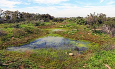 A network of vernal pools at Camp Pendleton, Fe...