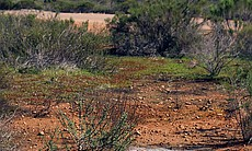 This photo shows restored vernal pools at Montg... (100804)