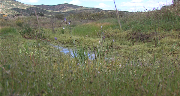Vernal pool still holding water was in San Diego County's Proctor Valley Apri...