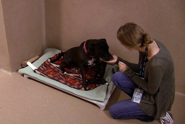 A dog in her room at the San Diego Humane Society, April ...