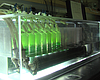 San Diego Company Creates Fatty Algae That Could One Day Help Fight...