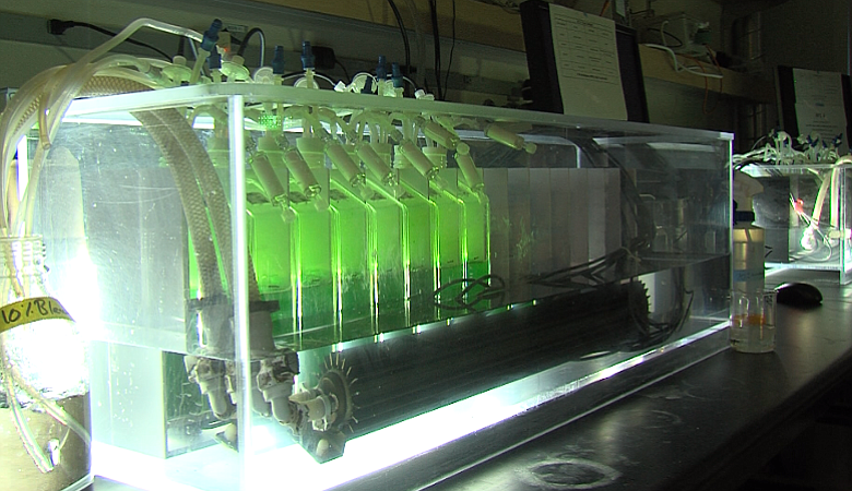 Different strains of algae are exposed to meticulously controlled artificial ...
