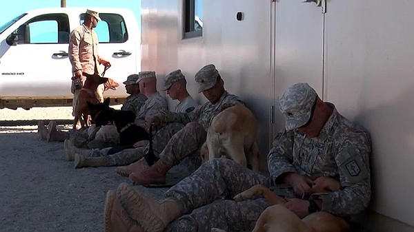 Soldiers with their dogs.