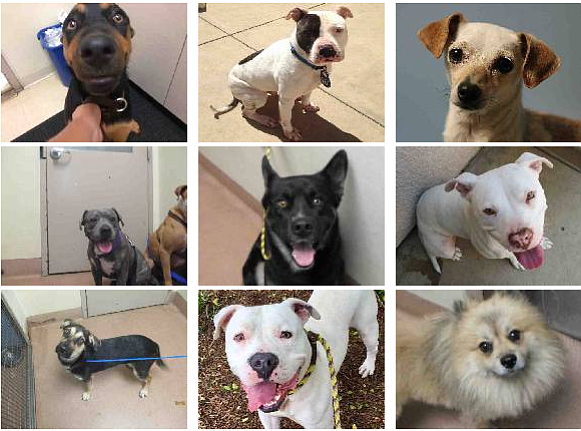 This photo shows some of the dogs rounded up in San Diego County after July 4...