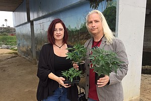 The Pros And Cons Of Growing Your Own Marijuana