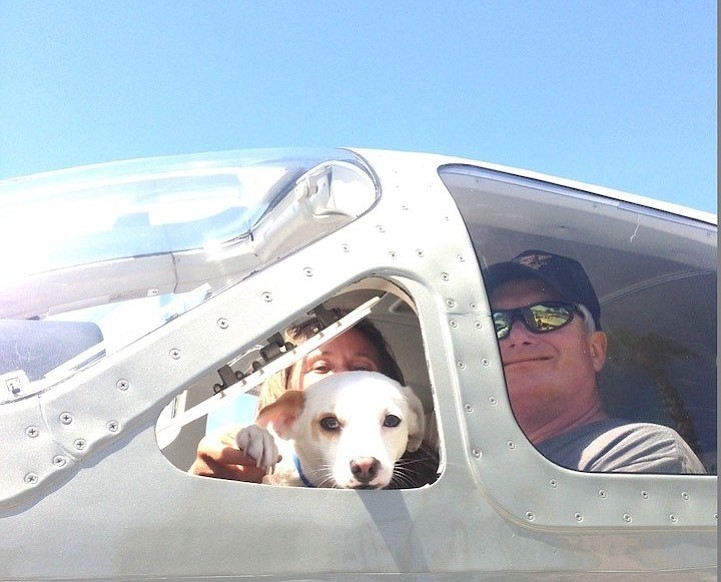 """A """"Wings of Rescue"""" flight carrying an expected 85 dogs/puppies and 20 cats/k..."""