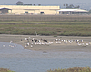 Birds gather to feed in the Tijuana River Estua...