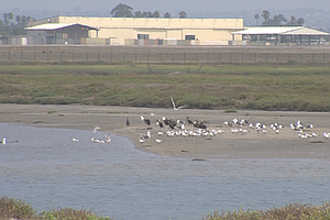 Tijuana River Estuary Endures In Face Of Many Ecological Challenges