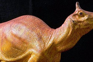 After 66 Million Years, Creature Wins State Dinosaur Honor
