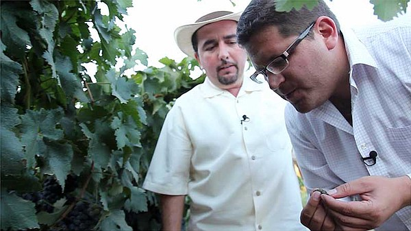 Host Jorge Meraz gets to taste wine grapes with Marco Ama...
