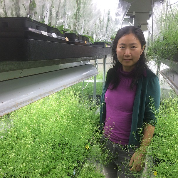 San Diego researcher Liang Song in a lab surrounded by plants.
