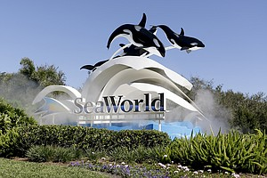 Photo for SeaWorld Losses Widen For The Year, CEO Manby Departs