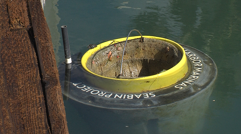 Seabin sits in the water at Cabrillo Isle Marina in San Diego on Nov. 9, 2017.