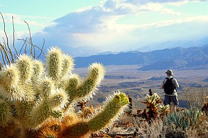 Anza-Borrego Desert Guidebook Helps Demystify California'...