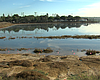 Kendall-Frost reserve is flooded as King tides ...