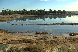 Photo for Environmental Project Could Lead To Restoration Of Mission Bay Marshland